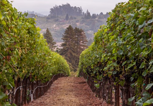 Single Vineyard Locations Russian River Dutton Goldfield