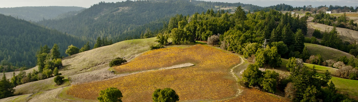 Explore our single-vineyard sites for our Russian River Valley wines